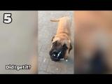 Смешные животные _ Топ-10  (сентябрь 2017) _ Funny Pet Videos