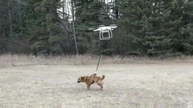 когда впадло выгуливать собаку