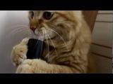 Cat and vacuum cleaner _ Ржака  Кот и пылесос