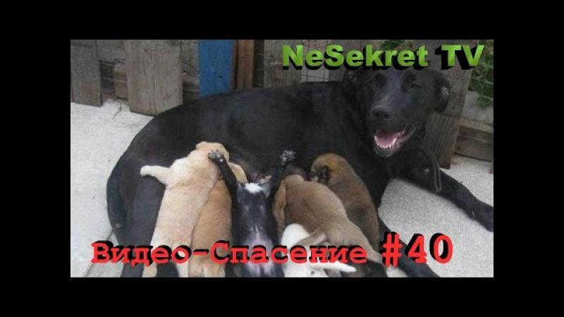 Спасение 40. Спасаем щенков и собаку от смерти. Город Улан-Удэ.