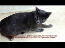 Как кошки становятся бездомными или история очередного предательства Диагноз фиброаденоматоз