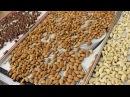 Что делать с орехами, как сушить, как жарить