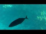 Погружение с аквалангом в Красном море. Экскурсия на лодке с прозрачным дном.