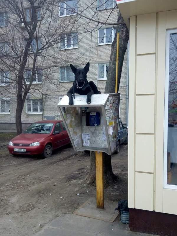 Собака - охраняка %)