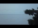 Дельфины с побережья п.Симеиз