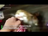 «Боря, отдай булку»׃ жадный кот стал звездой интернета