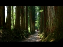 新緑の戸隠鏡池と奥社神社に・4K撮影