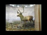конкурс научной иллюстрации в музее арктики и антарктики