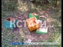 Косолапые грабители - медведи разоряют медовые пасеки в южных районах области