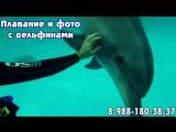 Плавание с дельфинами для взрослых и детей