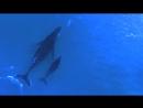 Мама-кит и мама-дельфин