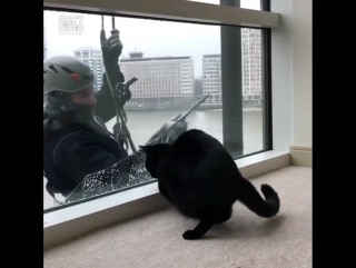 Сила притяжения котиков