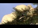 Товарищ Астроном - Заснеженные пальмы