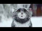 Короткометражный рождественский фильм про кота (с переводом)