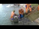 Облов рыбоводных садков ЮФ ФГУП