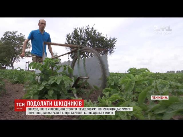 Винахідник з Рівненщини створив жуколовку для збору колорадських жуків