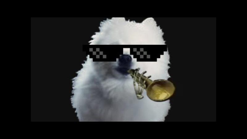 Gabe the Dog (Мистер Дудец, Skull Trumpet)