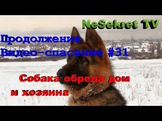 Продолжение Видео-Спасения 31. Собака обрела нового хозяина и дом. Город Улан-Удэ.