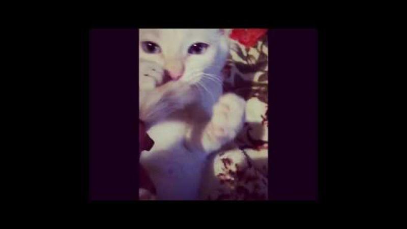 Ми-ми-мишность кота зашкаливает.............