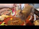 Домашний заяц Маруся
