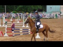 Золотисто рыжая лошадь буденовской породы Конкур