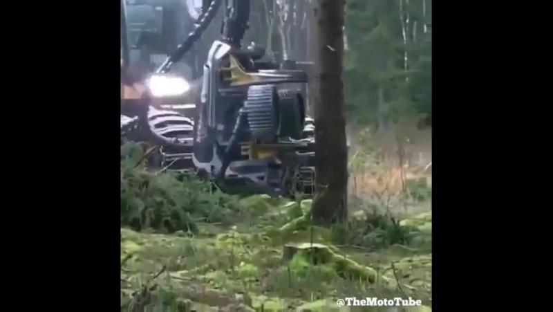 Ғажайып ағаш кесетін машина