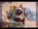 Моя кошка Нюша!
