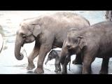 Слоненок родился в Московском зоопарке
