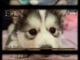 Bloodborne - Cleric Beast Husky - Extended Edition