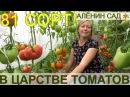 81 сорт томатов живьем сразу в одном видео Экскурсия в теплицы коллекционера сортов томатов