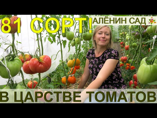 81 сорт томатов живьем сразу в одном видео! Экскурсия в теплицы коллекционера сортов томатов!
