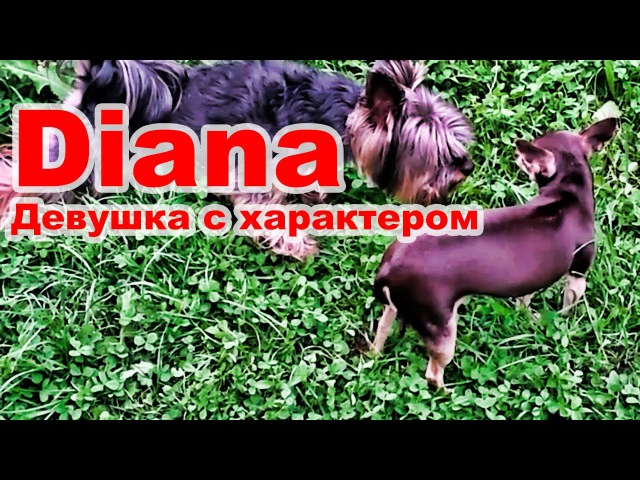 Когда девушка с характером. Милые и смешные собаки / When a girl with character. Cute and funny dogs