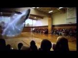 Кит в спортивном зале голография / Голография кит / Голография видео