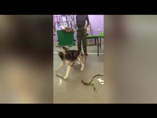 Жестокое обращения с собакой в кинологическом центре