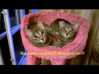Тилль и Деми ищут постоянный дом!!!