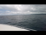 Залив Самана горбатые киты
