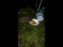 когда наступает ночь ,на кошачьи чашки нападают ежи