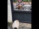 ОЧЕНЬ злая собака....