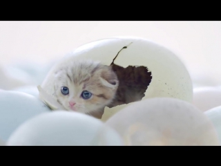 Милая реклама кошачьего корма