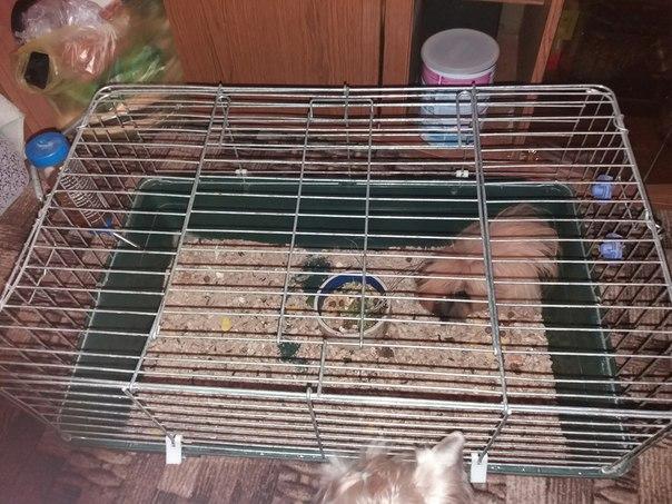 Продам клетку, поилку и устойчивую кормушку вместе с морской свинкой)