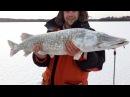 Щука 8 кг и 4.2 кг. Ловля щуки на жерлицы 2017. Трофейная зимняя рыбалка.