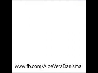 aloeveradanisma video