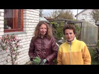 О зимовке фуксий в прикопе - для Садового мира
