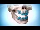 Новая практика регенерации зубов