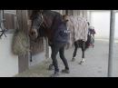 Vor dem Reiten - Übungen für Pferde mit Rückenproblemen