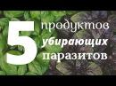 🔥 ТОП 5 Продуктов Убирающих Паразитов Навсегда Как быстро вывести паразитов