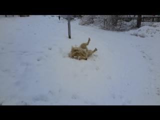 Снег в Снежинске.