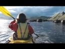 В Шотландии любопытный тюлень забрался на байдарку к гребцу