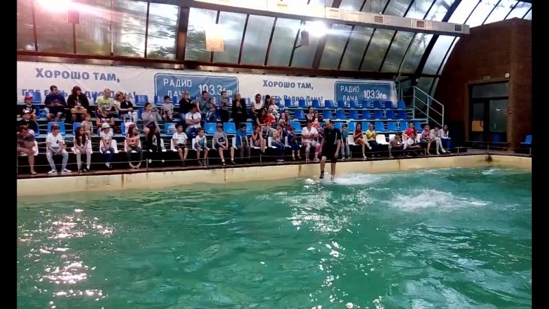 как тренер катается на белуге Феде в ростовском дельфинарии 28 05 17