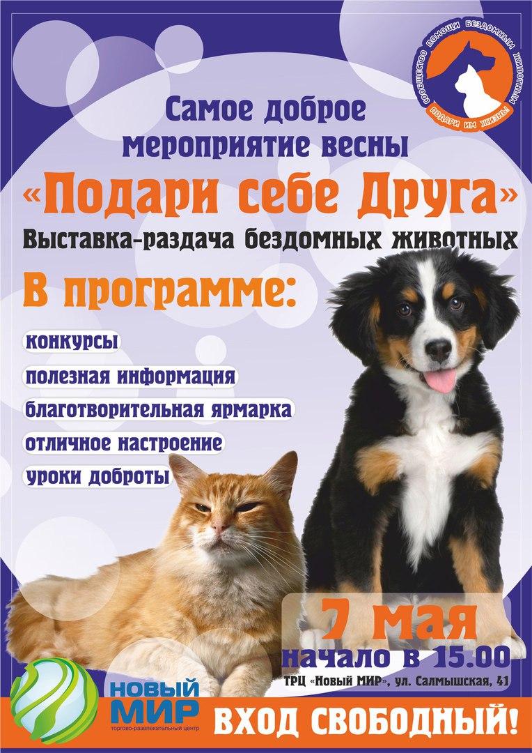 7 мая в Новом мире будут раздавать бездомных животных O7YxKvuFlIc